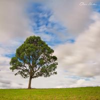 The Lonesome Tree by DrewHopper