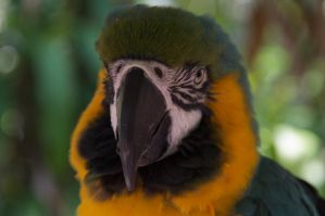 Parrot jungle by ScrwLoose