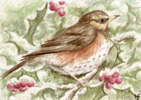 ACEO Redwing by haz-elf