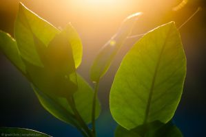 Photosynthesis by isotophoto