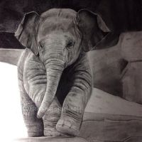 Baby elephant drawing by LucyCrt