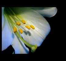 Lily by SarahJPhotography