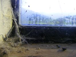 Webs and Windows by SLJones-photo
