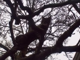 Barkly in a tree!!!!!!!!!!!!!!  4 by Cindercorn