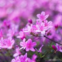 Spring up life by Philippe-Albanel