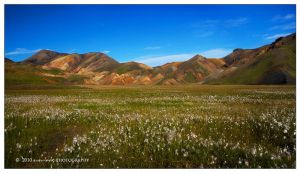 Endless Summer by marianne-lim