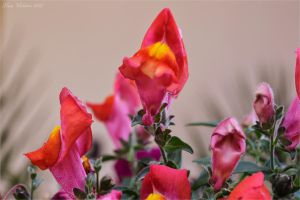 Other flowers by Luks85