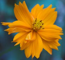 Yellow flower by princi83