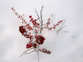 Red Flowers on Snow 2 by Ice-Beat