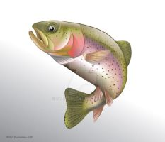 Trout fish Vector Illustration by ganzart
