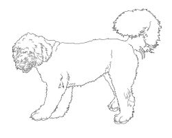 Old English Sheepdog Lineart by EternusNexxx