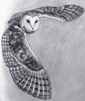Yet another owl by albalyra