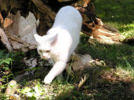Cat with Broken Trunk 4 by loopyker-stock