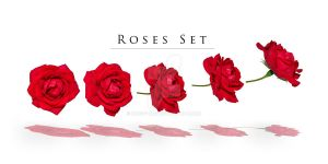 Roses set by Knopp-Art