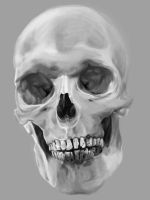 Skull Study by fractured-spaces
