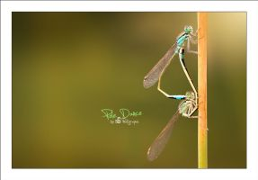 Pole Dance by sG-Photographie