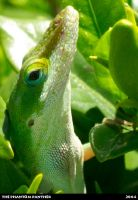 Close Up of a Lizard 02 by phantompanther