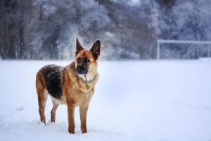 Leja and snow by Borderkowa