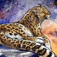 Amur Leopard by Nambroth