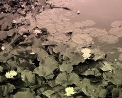 Moon Of Water-lilies by ALExIA483
