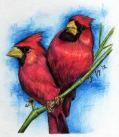 Red Cardinals by sueythebrave