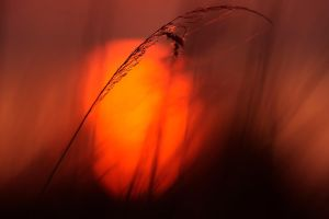 The sun by hofhauser