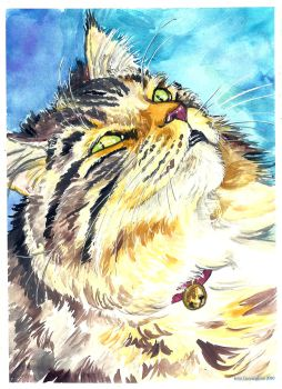 Maine Coon BUTTERS cat by jupiterjenny