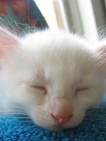 White Cat 4 by Electricstock