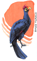 Ross's Turaco by OnyxSerpent