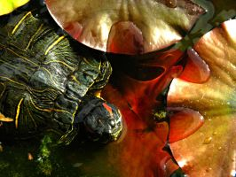 Turtle. by Daenel