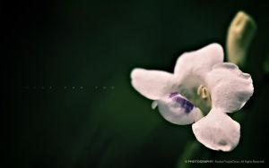 Flower II: Just For You 4 by reubenteo
