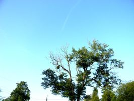 Above the tree lays the clear blue sky by MOGGGET