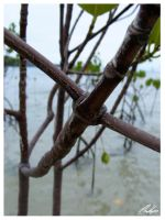 Mangroves by PKLdesigner