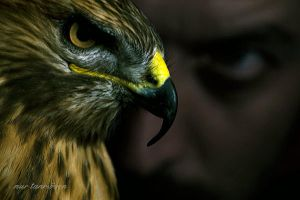 hawk by nurtanrioven