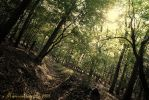 forest times by x-Marionette-x
