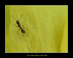 Ant on Yellow Hibiscus by kamlesh