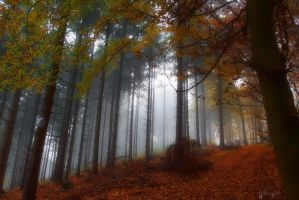 Autumnal Woods by Weissglut