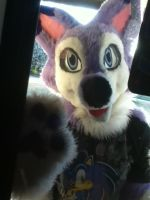 Wolf in the Window~ by BlueWaterRose