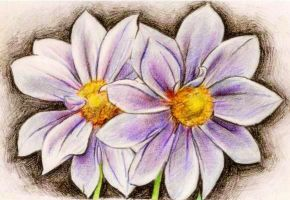 Colored Pair of flowers by cloudybrain