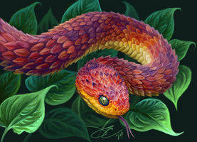 Bush Viper I by greyviolett