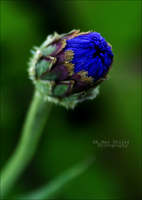 'Blues And Greens' by AMayShulerphotogrphy