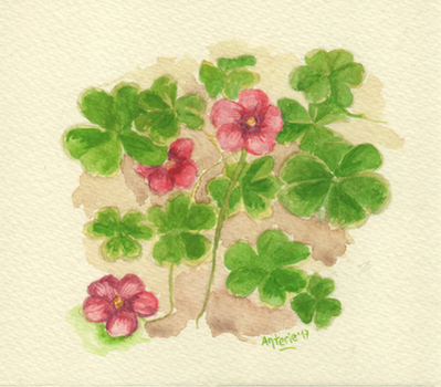 Clovers by Anterie