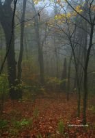 A Foggy Autumn by TRBPhotographyLLC