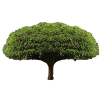 Apple Tree PNG by LordNicax