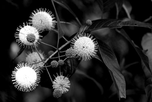 Plant Unknowns by Norn10