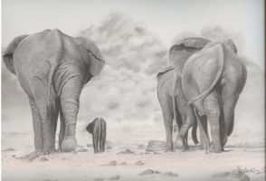 elephants by Jenni-Rose