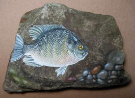 Blue Gill on Slate by LiquidFaeStudios