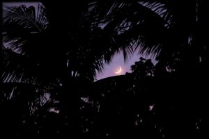 Moonlight Through The Palms by TThealer56