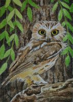 ATC Owl and the Willow by waughtercolors