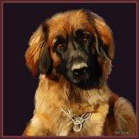 Leonberger by NicoleBarber